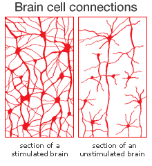 Brain cell connections